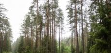 Фонд имущества Петербурга выставил на торги земельный участок в Курортном районе под оздоровительную недвижимость