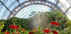 Депутат петербургского закса Алексей Ковалёв высказался против реконструкции оранжерей Таврического сада частной компанией