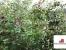 Продать Дачи, коттеджи, загородные дома Московская область, Егорьевск, ул. Механизаторов