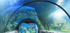 Океанариум на проспекте Славы построят в 2017 году