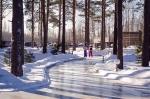 Комитет по природным ресурсам Ленобласти через суд лишает «ОхтаПарк» 14,5 га лесных угодий за долги