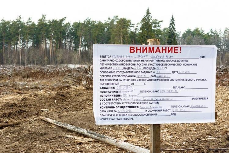 Компания «Аверус» начала строительство ЖК на месте вырубленного леса