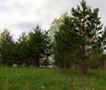 Фото КП Рощинский хутор от Петербургские Просторы. Коттеджный поселок Roshhinskiy hutor