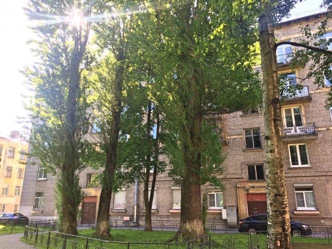 Василеостровцы будут судиться с властями против вырубки деревьев