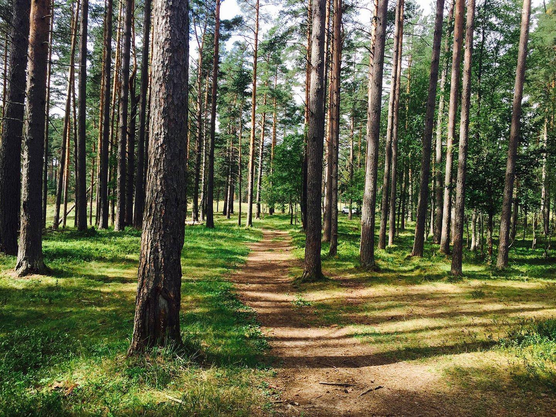 Фото коттеджного поселка Солнечный орнамент от Русь: Новые Территории. Коттеджный поселок