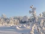 УК «Согласие» открыла бронирование земельных участков в коттеджном поселке «Лесные террасы» в Ленобласти