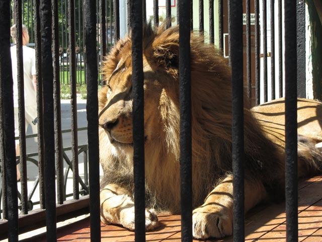 Поиски места для нового зоопарка продолжаются