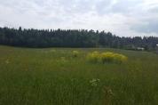 Фото КП Сосновские горки от 1-я Академия недвижимости. Коттеджный поселок Sosnovskie gorki