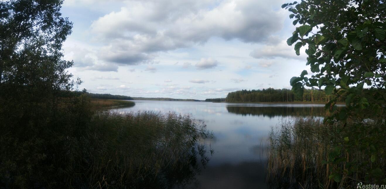 Продать Земельные участки, земля Ленинградская область,  Лужский, Старая Середка д