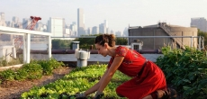Депутат Ленобласти предложил организовывать в парках и пустырях городские огороды