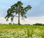 Фото КП Иннола парк от Славные просторы. Коттеджный поселок Innola park