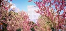 В ЖК «Румянцево-Парк» предлагают скидки на квартиры до 20%