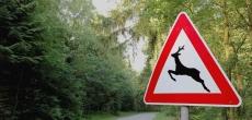 Утверждены правила строительства безопасных для животных переходов через автодороги