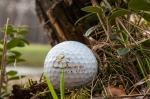 Смольный аннулировал постановление о предоставлении 205,8 га под Сестрорецком под гольф-клуб компании «Гольф Дюны»