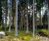 Продать Земельные участки, земля Александровка д