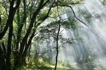 Фото коттеджного поселка Водопад от Застройщик неизвестен. Коттеджный поселок Vodopad