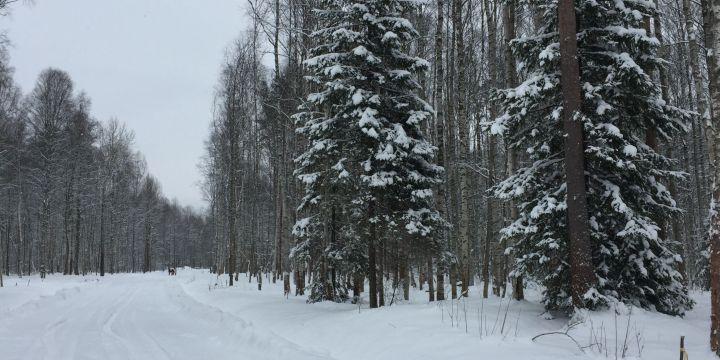 Кассационная инстанция Арбитража узаконила строительство коттеджного поселка «Кавголовское озеро. Загородная резиденция»