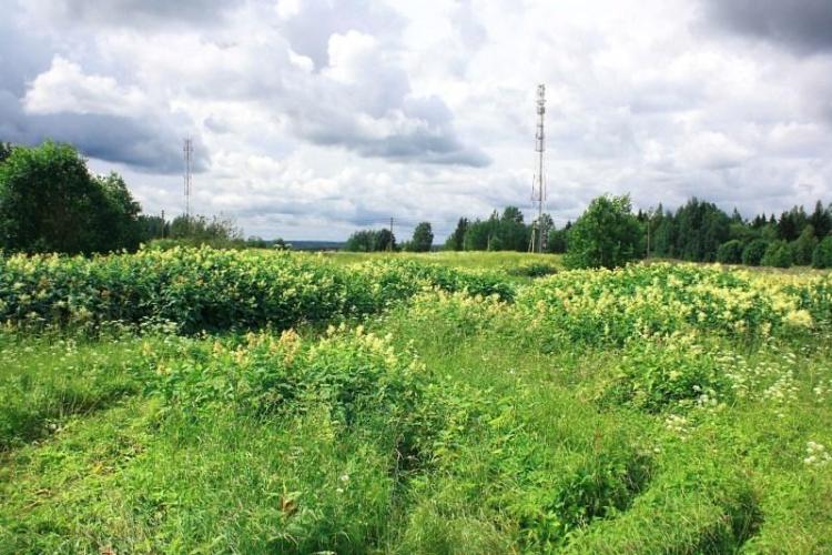 Компания «Гранат» вывела на рынок коттеджные поселки «Рощинский хутор» и «Южные просторы»