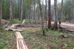 Участок, на котором «Сити 78 загородная недвижимость» строит коттеджи, по решению суда исключаются из реестра лесного фонда