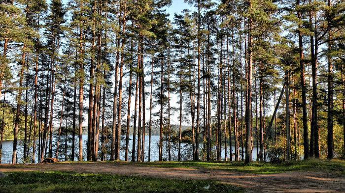 Жители Ленобласти в суде отстояли лес рядом с Уловным озером от застройки